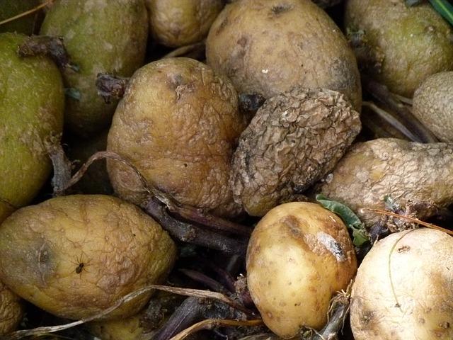 rotting-potatoes-185928_640